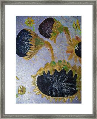Sunflower Cycle Of Life 3 Framed Print