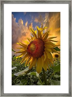 Sunflower Dawn Framed Print by Debra and Dave Vanderlaan