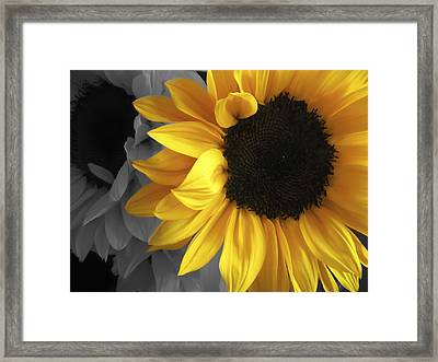 Sunflower Days Framed Print by The Forests Edge Photography - Diane Sandoval