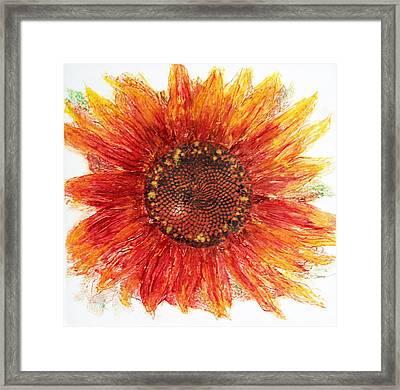 Sunflower Deep Framed Print by J L Carothers