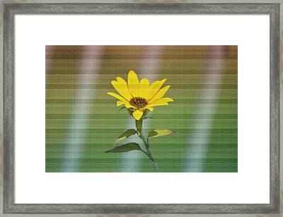 Sunflower Delight Framed Print by Sonali Gangane