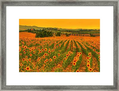 Sunflower Dream Framed Print by Midori Chan