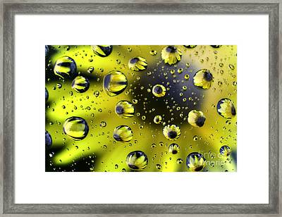 Sunflower Drop Abstract Framed Print by Mark Kiver