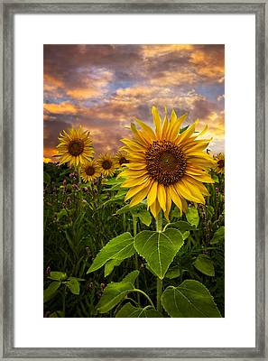 Sunflower Dusk Framed Print