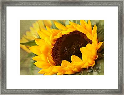Sunflower Framed Print by Eden Baed