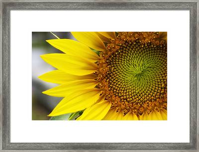 Sunflower Face Framed Print