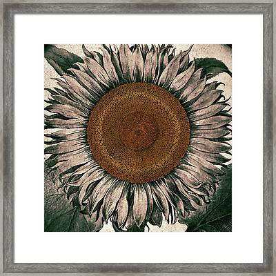 Sunflower - Face To The Sunshine Framed Print by Patricia Januszkiewicz