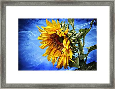 Framed Print featuring the photograph Sunflower Fantasy by Barbara Chichester