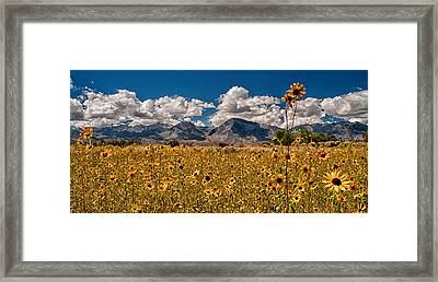 Sunflower Field Framed Print by Cat Connor