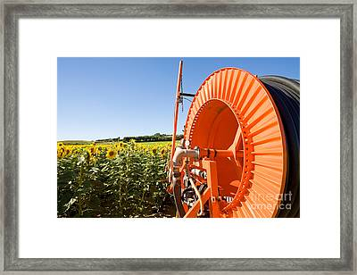 Sunflower Field, French Provence Framed Print