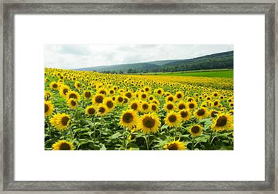Framed Print featuring the photograph Sunflower Field by Gary Wightman