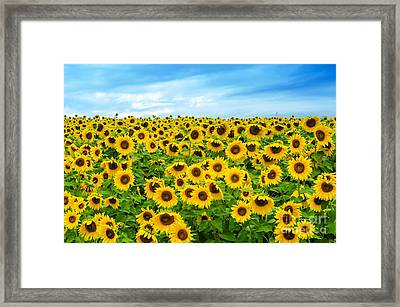 Framed Print featuring the photograph Sunflower Field by Mike Ste Marie