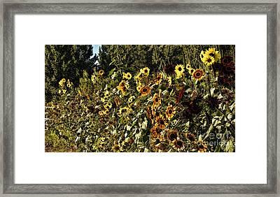 Sunflower Fields Forever Framed Print by Peggy Hughes