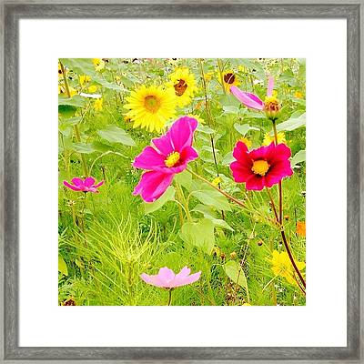 Sunflower Fields In Merrimack.  #owers Framed Print