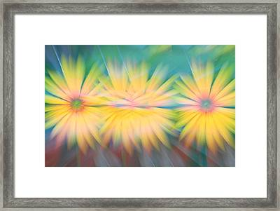 Sunflower Garden Abstract Framed Print