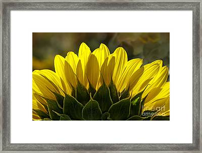 Sunflower Glowing Abstract By Nature Framed Print by Lee Craig