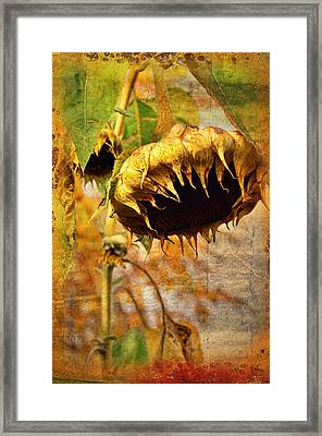 Sunflower Framed Print by Gynt