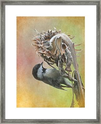 Sunflower Harvest Framed Print by Angie Vogel