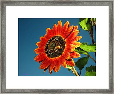Framed Print featuring the photograph Sunflower Honey Bee by Joyce Dickens