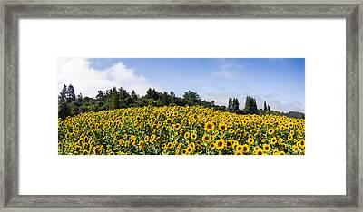 Sunflower Horizon Number 2 Framed Print