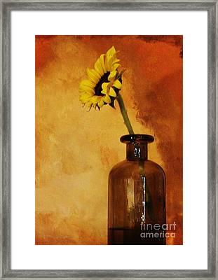 Sunflower In A Brown Bottle Framed Print by Marsha Heiken