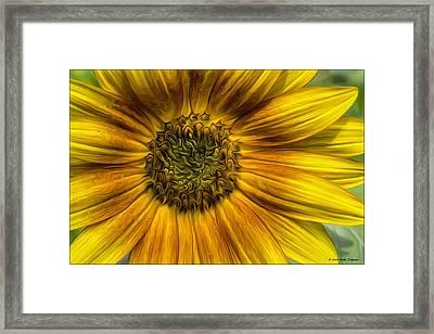 Sunflower In Oil Paint Framed Print