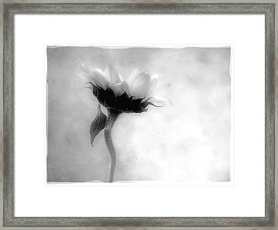 Framed Print featuring the photograph Sunflower In Profile by Louise Kumpf