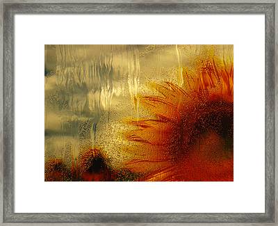 Sunflower In The Rain Framed Print