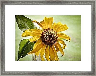 Sunflower In Window Framed Print