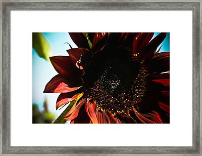 Framed Print featuring the photograph Sunflower by Joel Loftus