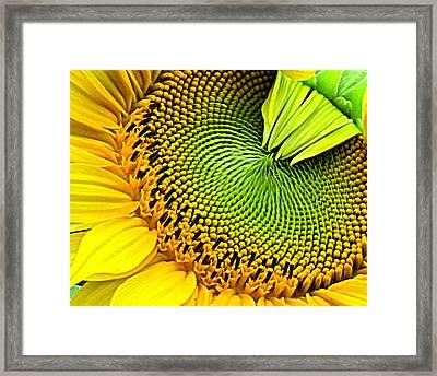 Kaleidescope Sunflower Framed Print