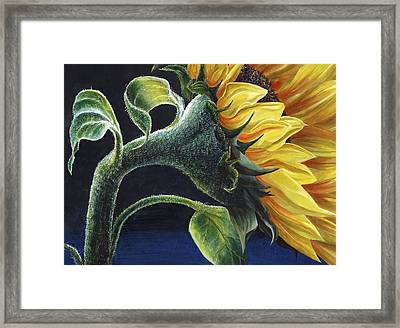 Sunflower Framed Print by Karen Wright