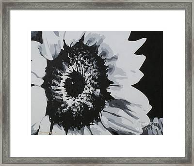 Sunflower Framed Print by Katharina Filus