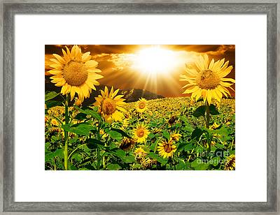 Framed Print featuring the photograph Sunflower Light Magic by Boon Mee