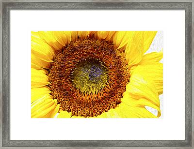 Sunflower Love Framed Print by Les Cunliffe