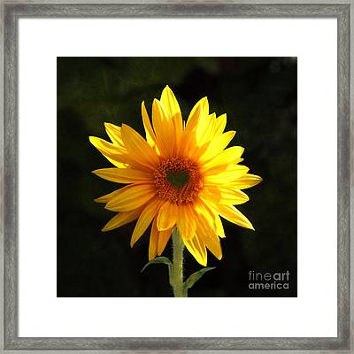 Framed Print featuring the photograph Sunflower Love by Marjorie Imbeau