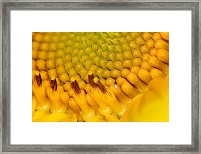 Sunflower Macro 2 Framed Print