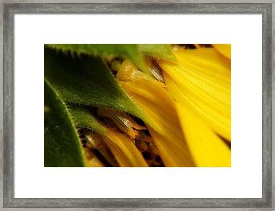 Sunflower Macro 5 Framed Print
