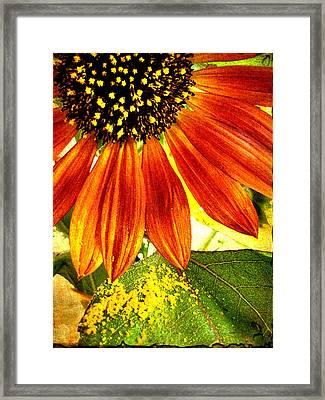 Sunflower Memories Framed Print by Kathy Bassett