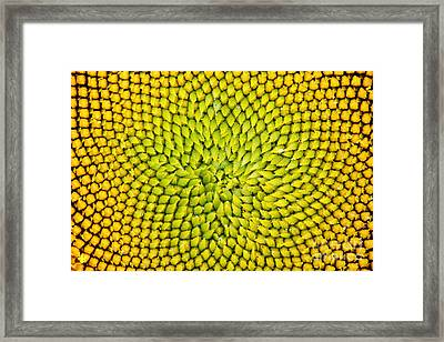 Sunflower Middle  Framed Print