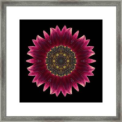 Sunflower Moulin Rouge I Flower Mandala Framed Print