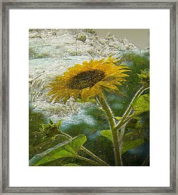 Sunflower Mountain Framed Print