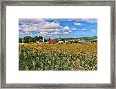 Sunflower Nirvana 17 Framed Print