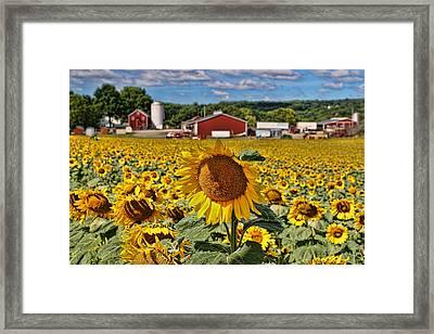 Sunflower Nirvana 21 Framed Print