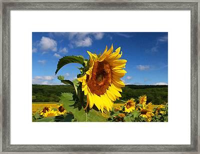 Sunflower Nirvana 22 Framed Print by Allen Beatty