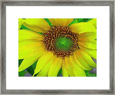 Sunflower On Strong Canvas Framed Print by Buzz  Coe