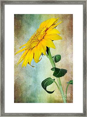 Sunflower On Textured Canvas Framed Print by Kaye Menner