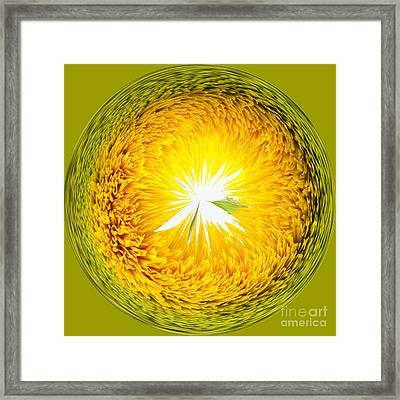 Sunflower Orb Framed Print by Anne Gilbert
