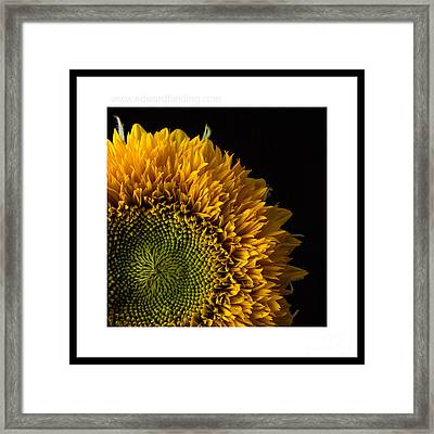 Sunflower Original Signed Mini Framed Print by Edward Fielding