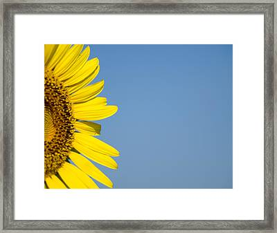 Sunflower Framed Print by Paige Sims